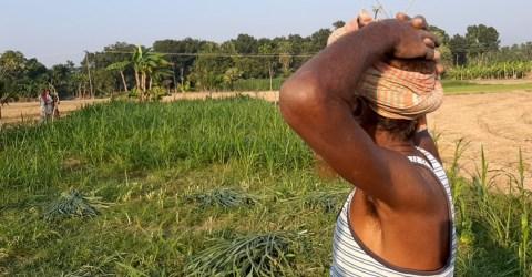 বড়াইগ্রামে বিরোধের জেরে ক্ষেতের বনায়ন ধ্বংস, থানায় অভিযোগ