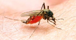 New discovery in battle against malaria