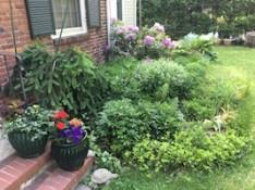 Gardening in Newton