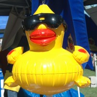 Duck Race and Festival, Nevada Humane Society, Reno