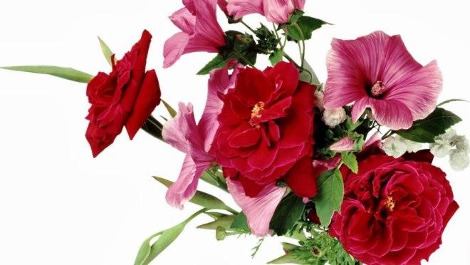 Fresh Flowers HD Wallpapers Download For Desktop