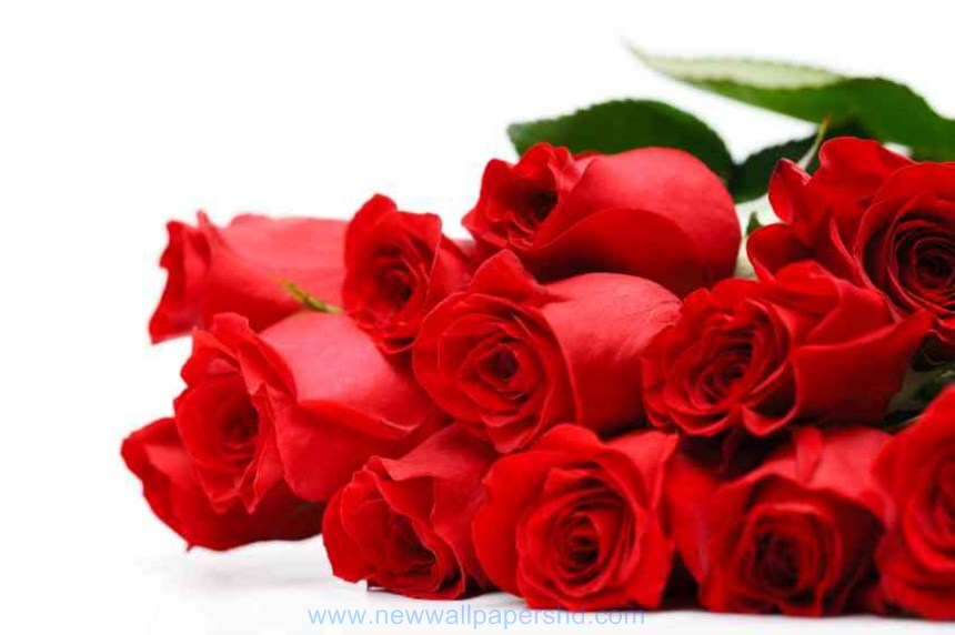 Valentine Day Flowers HD Images Photos Pics HD Walls