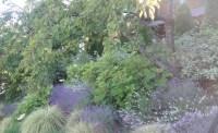 Seattle Flower Garden