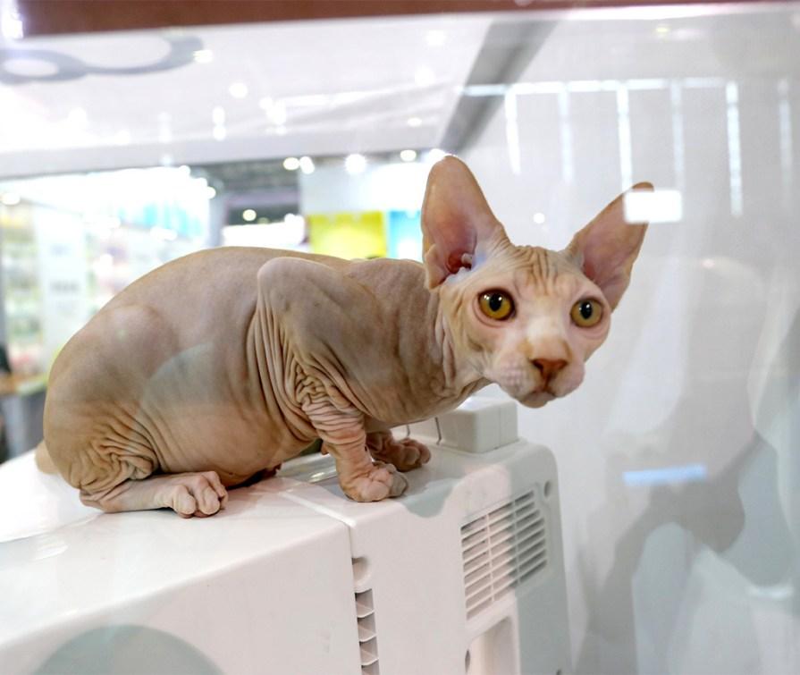 Кошка пережила 40 дней вынужденной изоляции и родила