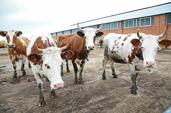 Нулевой НДС при продаже и импорте племенного скота могут продлить