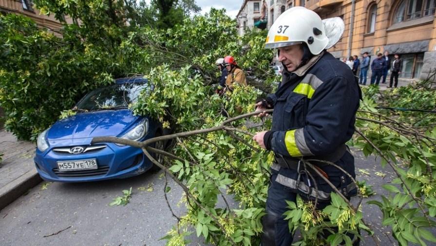 Ураган в Петербурге повалил за день больше десятка деревьев, светофоров и знаков