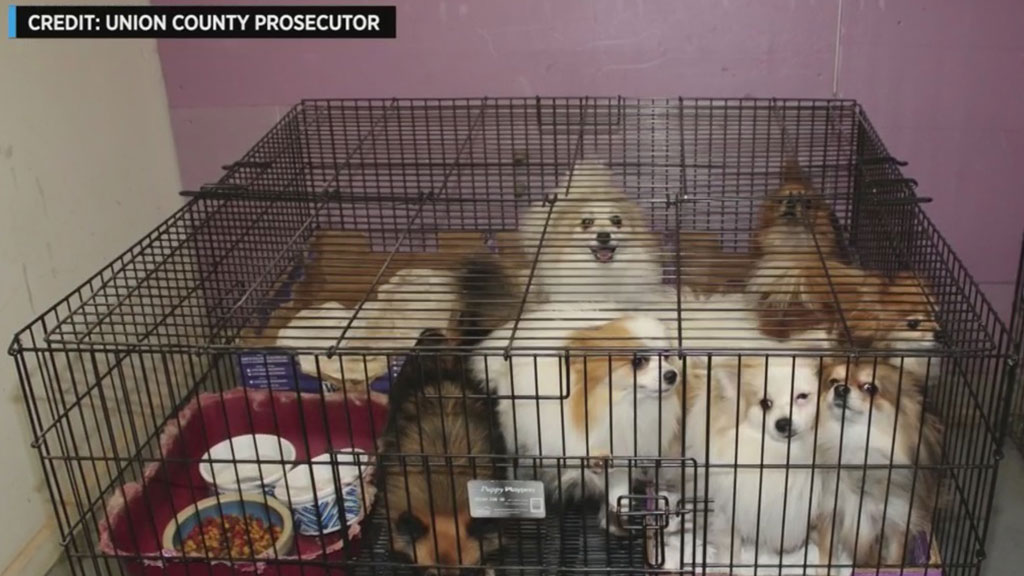 More Than 130 Animals Rescued From Illegal Puppy Mill In New Jersey, Officials Say