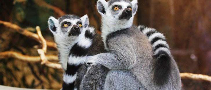 ニューヨーク動物園