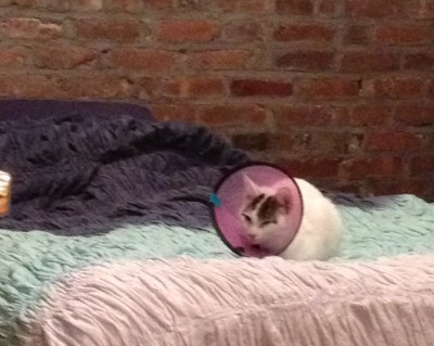 "Prince Phillip in his ""Elizabethan Collar- that's what the Brits call the cone!"