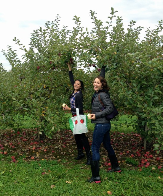 apple picking western mass