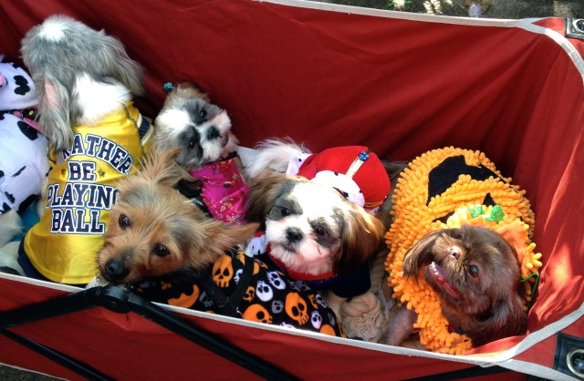 tompkins-square-halloween-dog-16
