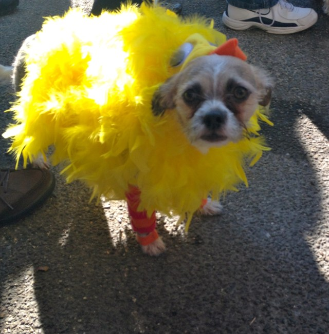 tompkins-square-halloween-dog-3