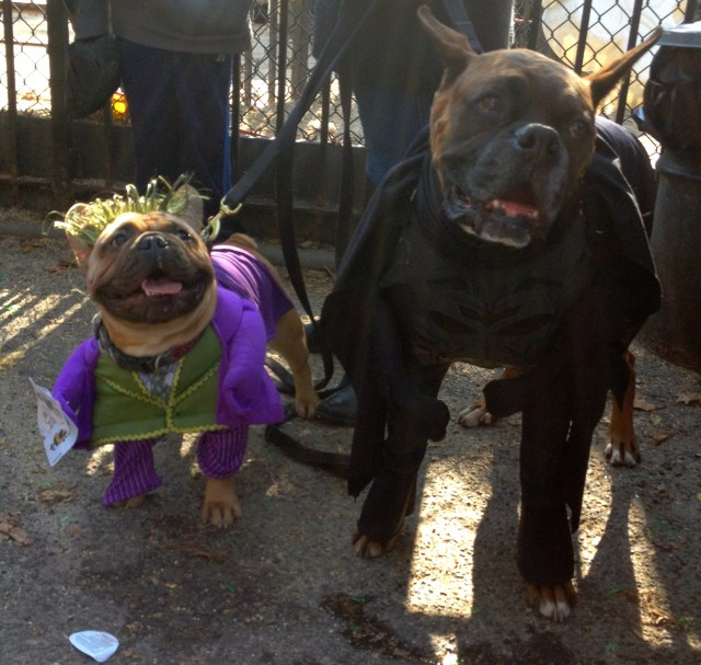 tompkins-square-halloween-dog-12