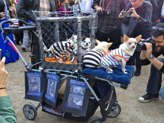 tompkins-square-halloween-dog-15