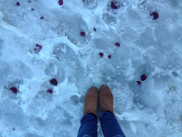 snow-rose-petals