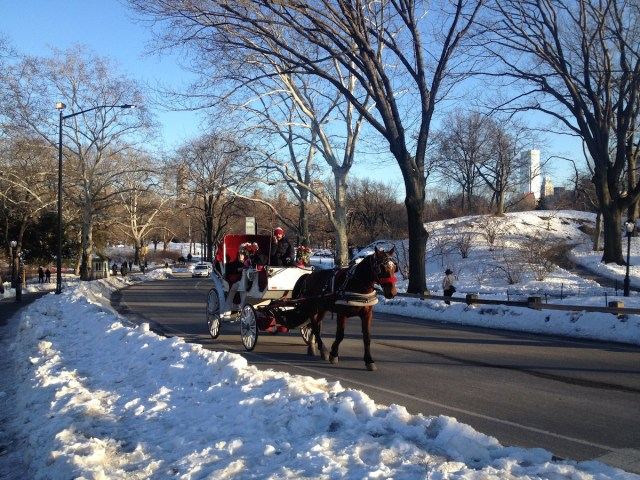 horse-carriage-central-park-winter