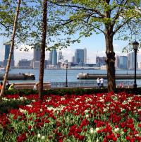 tulips-battery-park