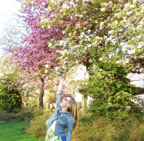 brooklyn-botanical-cherry-blossoms