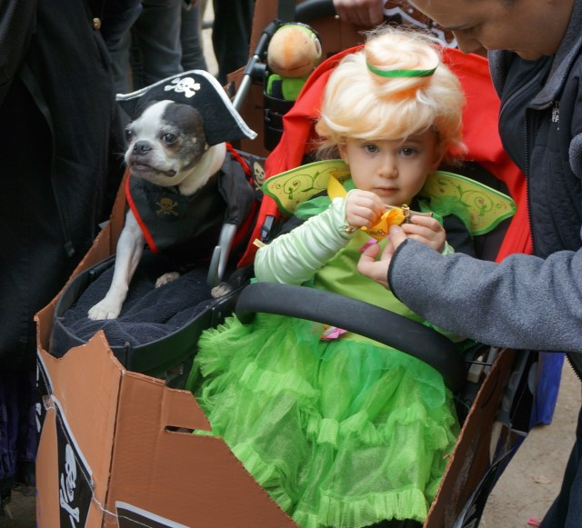 dog_parade_peterpan