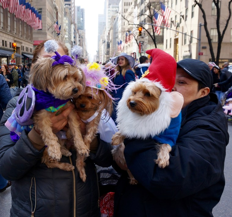 easter-bonnet-parade-nyc-dogs
