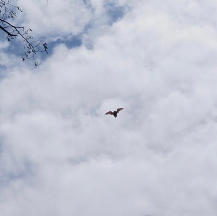 central park bat