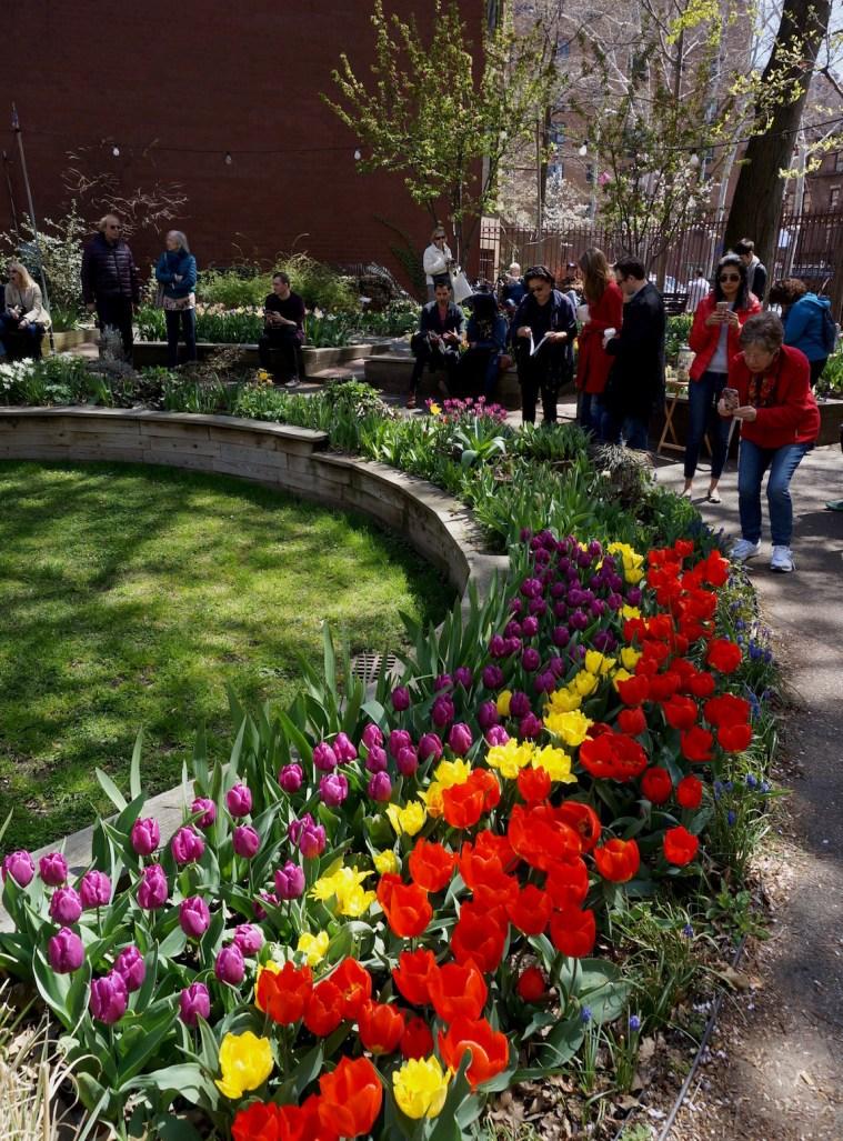 West Side Community Garden Tulip Festival uws