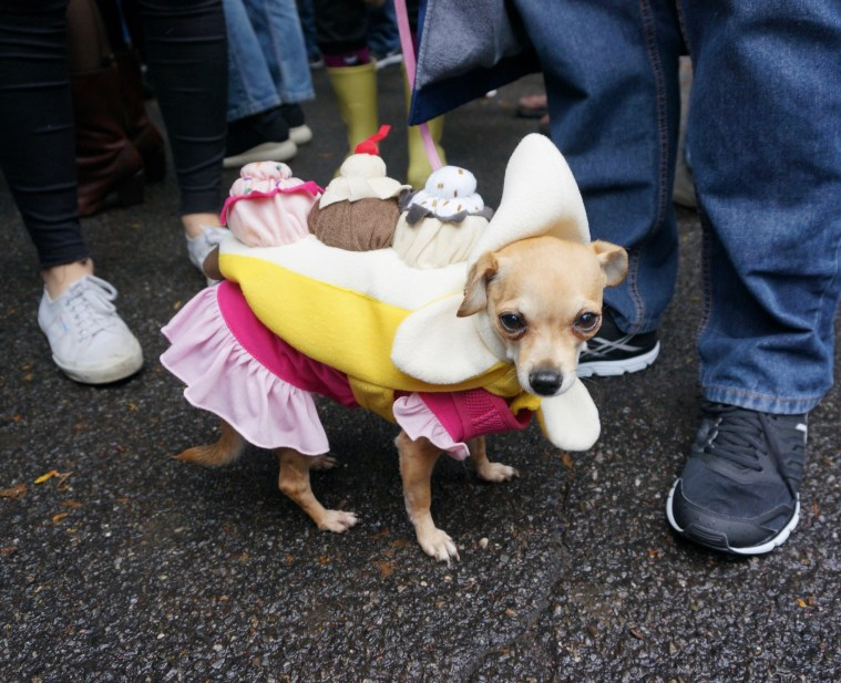 halloween-dog-parade-banana-split