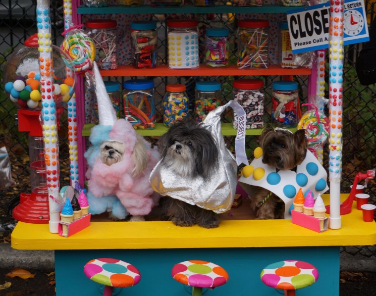 halloween-dog-parade-candy-shop