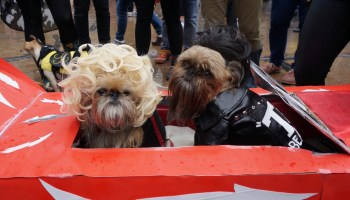 costumed cuteness at the tompkins square halloween dog parade 2016 - Halloween Parade East Village