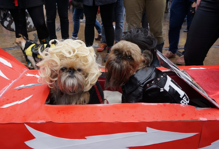 halloween-dog-parade-grease