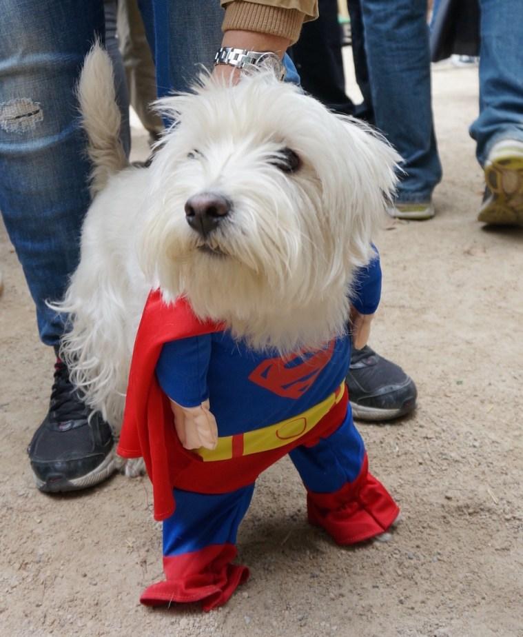 halloween-dog-parade-nyc-superman
