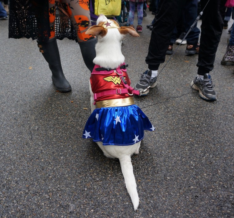 halloween-dog-parade-wonder-woman