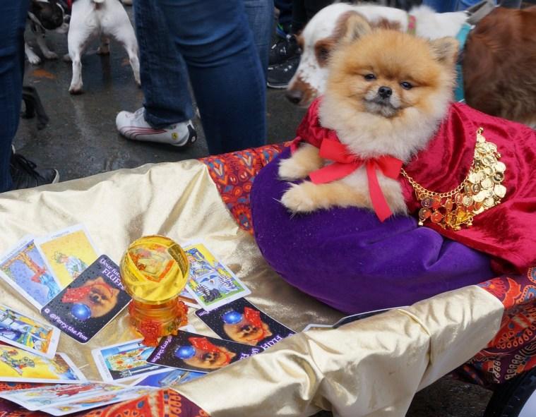 tompkins-park-halloween-dog-parade-pom-reader