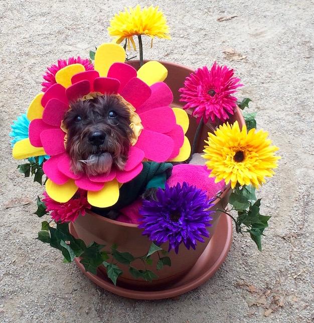 tompkins-square-park-halloween-dog-parade-flower