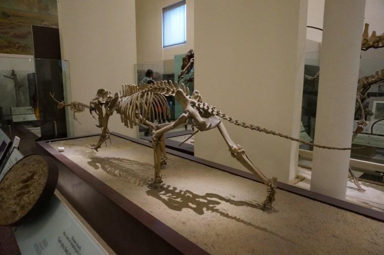museum hack AMNH tour