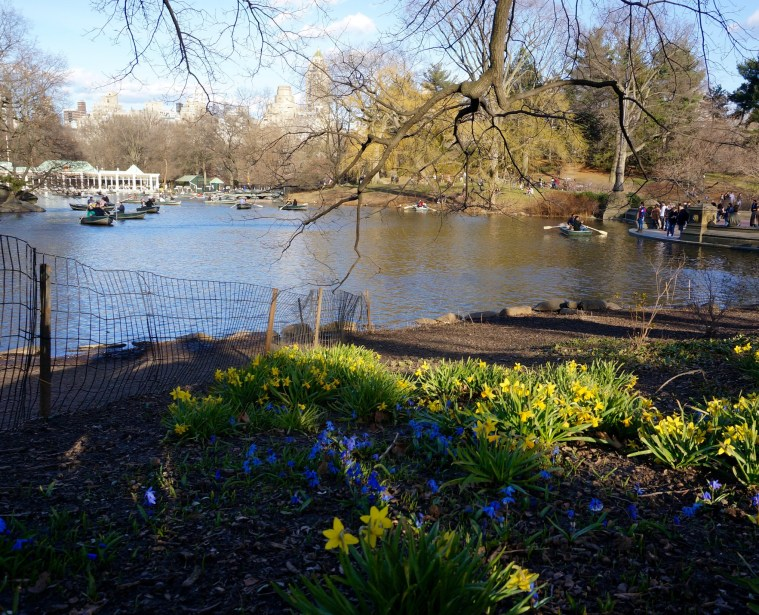 spring nyc flowers central park lake