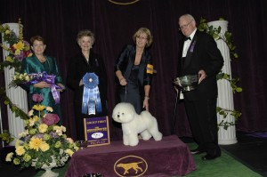 2013 nonsporting winner 300x199 2013 Westminster Dog Show