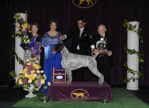 2013 sporting winner 300x217 2013 Westminster Dog Show