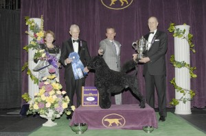 2013 working winner 1 300x199 2013 Westminster Dog Show