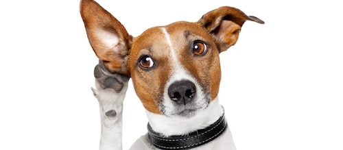 Listen-doggie