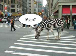 What Everybody Ought to Know about these Weird NYC Crosswalks