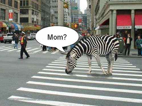 Crosswalks-Zebra design