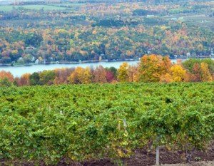 Things to Do at the Finger Lakes