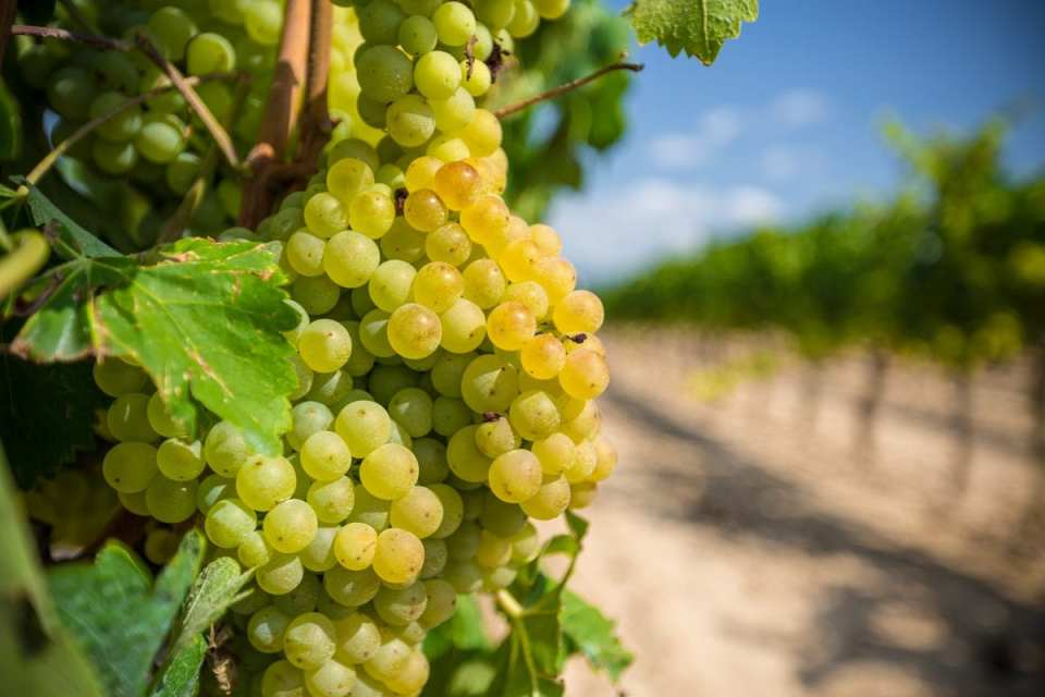 Your Best Guide to Tasting World-Class Wines in the New York Finger Lakes