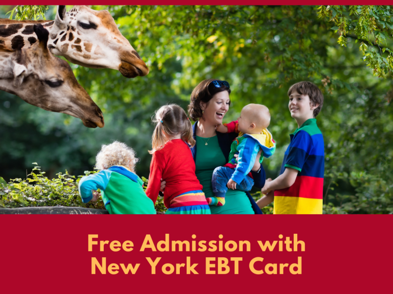 """""""Free Admission with New York EBT"""""""