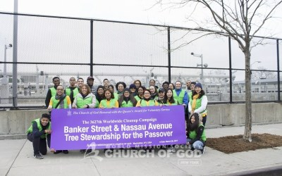 Brooklyn Tree Stewardship