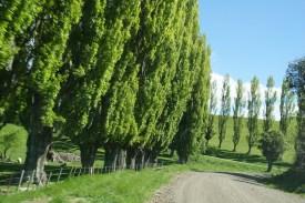 Eine Straße, viele Bäume...
