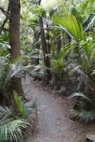 Urwald und Palmen im Garten