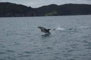 der erste Delphin