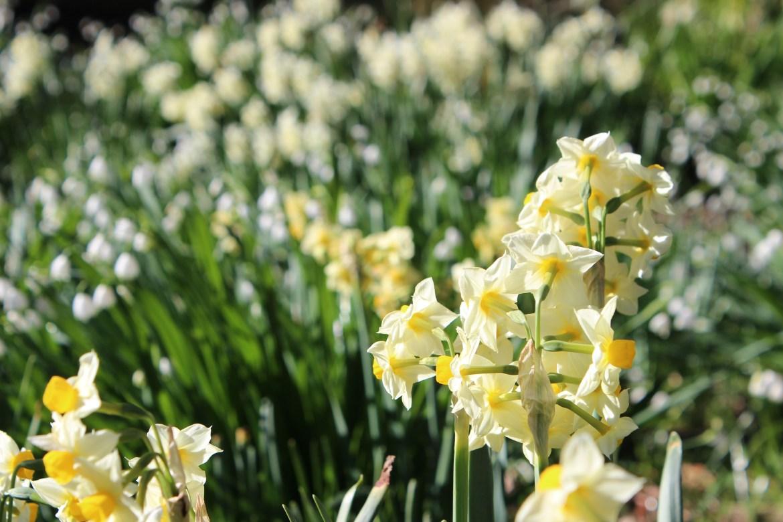 基督城:花都开好了,出来踏春吧!
